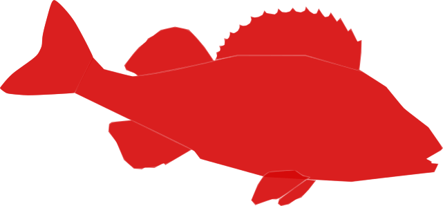 red-perch